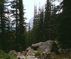 indie, nature, and trees image