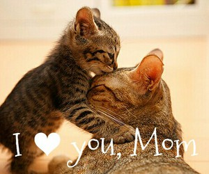 mother, mothers day, and love you mom image