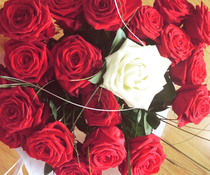 blanche, anniversaire, and roses image
