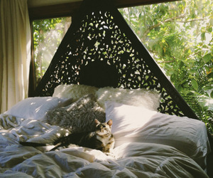 bedroom, cat, and bed image
