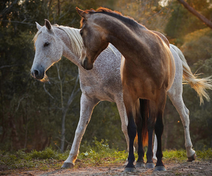horses and animals image