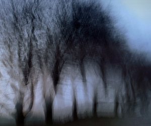 blurry, forest, and nature image