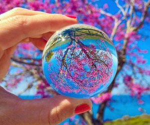 pink, spring, and blossom image