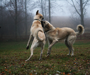 dogs, power, and photo by sofia! image