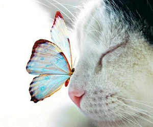 cat, butterfly, and animal image