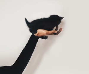 cat, black, and kitten image