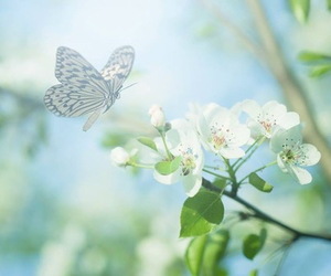 nature, butterfly, and flowers image