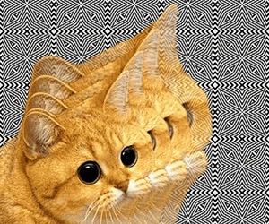 cat, gif, and trippy image