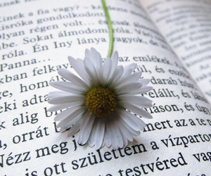 book, nature, and nice image