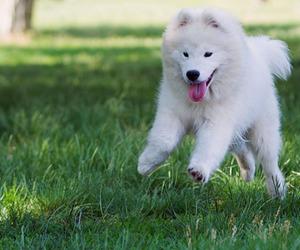 beautiful, dog, and puppy image
