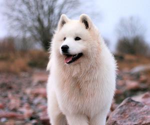 dog, puppy, and beautiful image