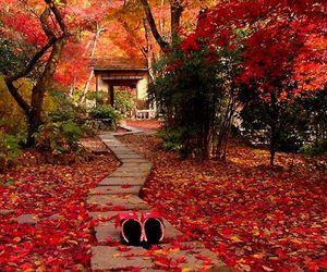 autumn, japan, and landscapes image