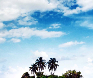 exotic, summer, and tropical image