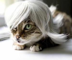 animals, imagen, and cat image