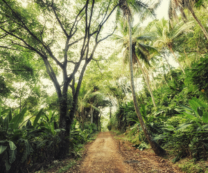 forest, jungle, and summer image