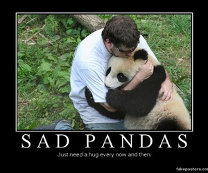 hug, panda, and sad image