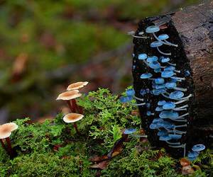 mushroom, blue, and nature image