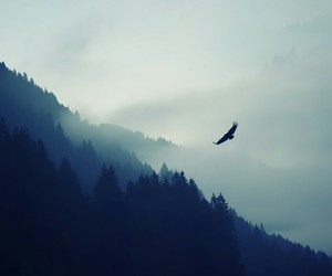 eagle, nature, and wallpaper image