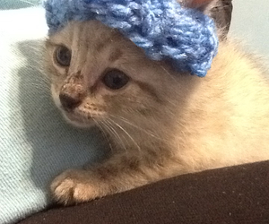 hat, cat, and cute image