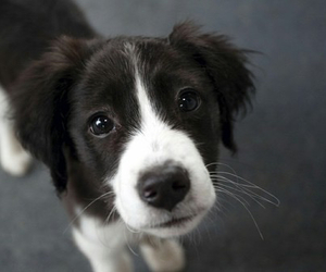 puppy, dog, and cute image