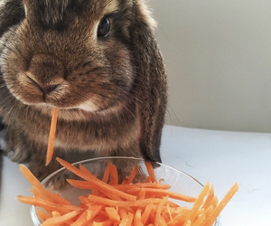 animals, eating, and rabbit image