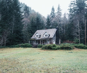 forest, woods, and house image