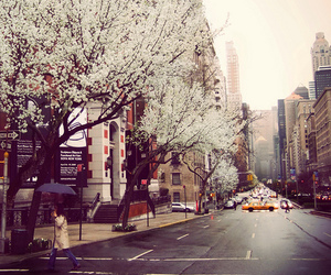 city, tree, and street image