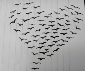 birds, heart, and love image