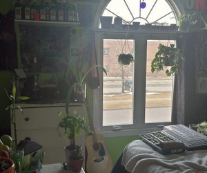plants, nature, and room image