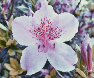 background, bloom, and flower image