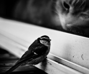 cat, bird, and black and white image