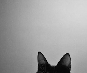 black and white, cat, and ears image
