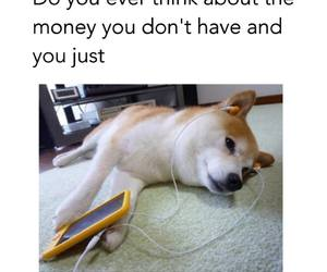 funny, dog, and money image