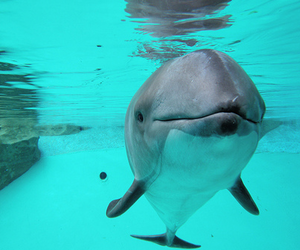 dolphin and cute image
