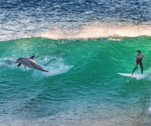 animal, dolphin, and guy image