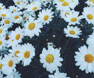 flowers, white, and leaves image