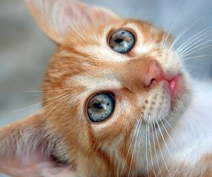 cat, kitten, and djur image