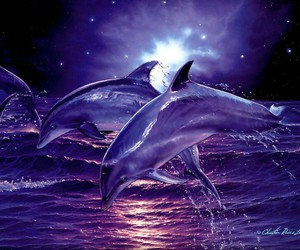 dolphin, night, and sea image