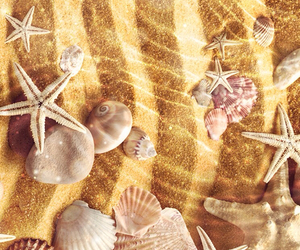 shells, wallpaper, and beach image