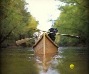 dog, animal, and boat image