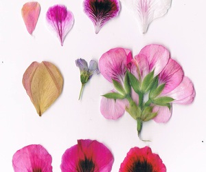 flowers, pressed flowers, and spring image