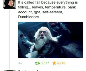 fall, funny, and harry potter image