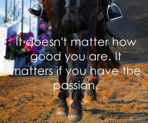 horse, passion, and equestrian image