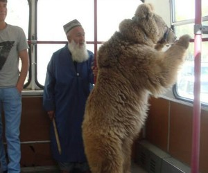 bear, bus, and funny image