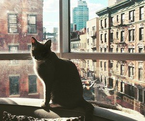 cat, city, and photography image