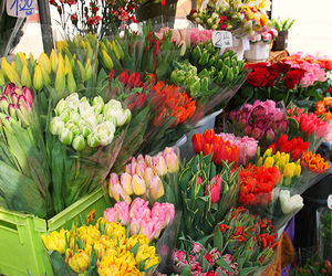 beautiful, flowers, and pretty image