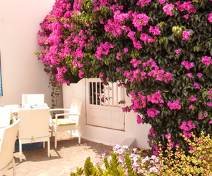 floral, flowers, and Greece image