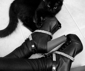 cat, black, and shoes image