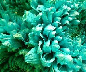 blossoms, flowers, and teal image