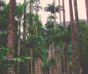 landscape and palms image